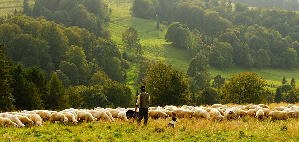 Moldavian Pasture